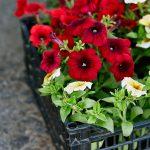 Virágpalánta igénylőlap